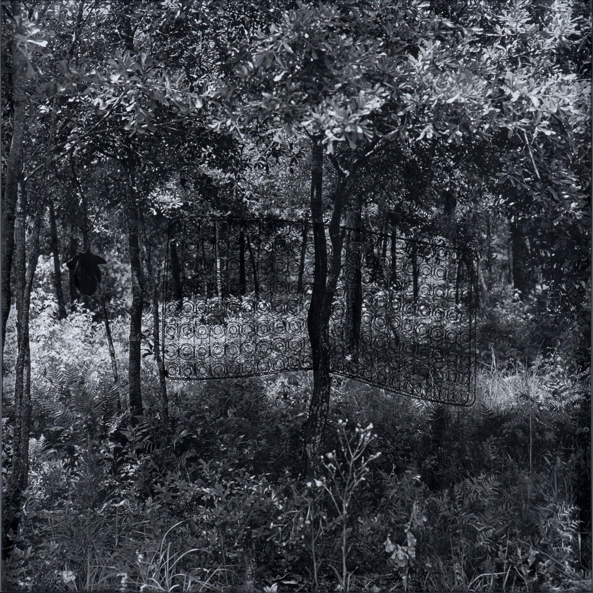 "Untitled (Box Spring in Tree), from the ""Sea Island Series"""